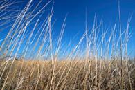 Grasslands Initiative