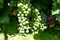 Flying High for Fine Wine