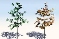 Measuring Vegetation (NDVI & EVI)