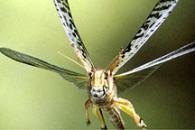 Locust!
