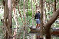 Escape from the Amazon