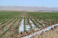 Just Add Water: a Modern Agricultural Revolution in the Fertile Crescent