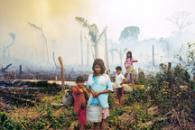From Forest to Field: How Fire is Transforming the Amazon