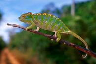 Uncovering Chameleons