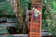 Stealing Rain from the Rainforest