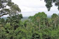 Defying Dry: Amazon Greener in Dry Season than Wet