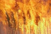 Global Fire Monitoring
