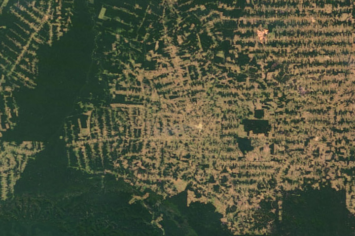 World of Change: Amazon Deforestation