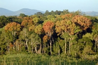 Seeing Forests for the Trees and the Carbon:  Mapping the World's Forests in Three Dimensions