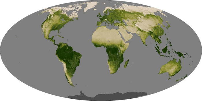 Global Map Vegetation Image 2