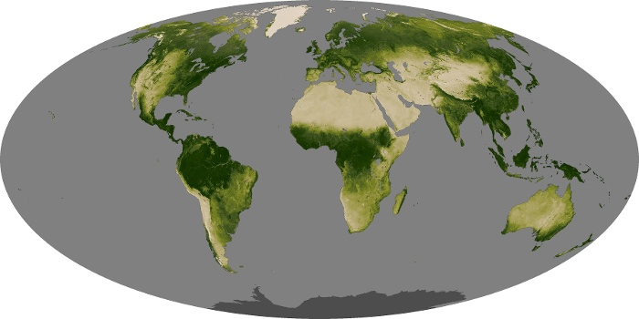 Global Map Vegetation Image 7