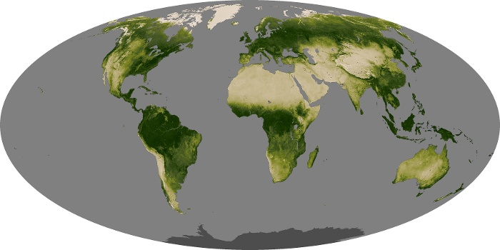 Global Map Vegetation Image 16