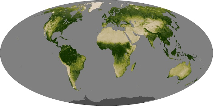 Global Map Vegetation Image 3