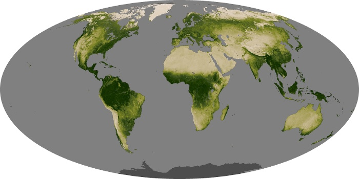 Global Map Vegetation Image 32