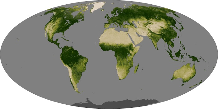 Global Map Vegetation Image 41