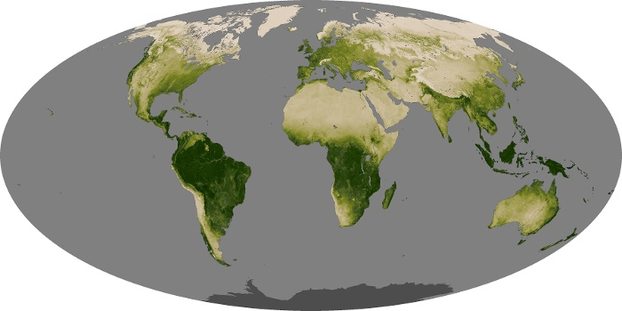 Global Map Vegetation Image 49