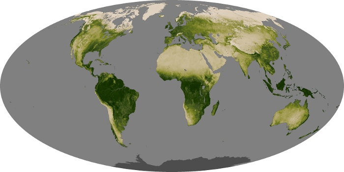 Global Map Vegetation Image 50