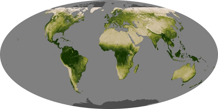 Global Map Vegetation Image 29