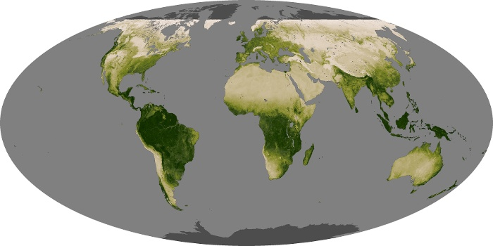 Global Map Vegetation Image 1