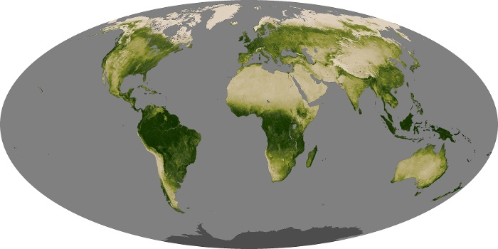 Global Map Vegetation Image 34