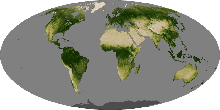 Global Map Vegetation Image 6
