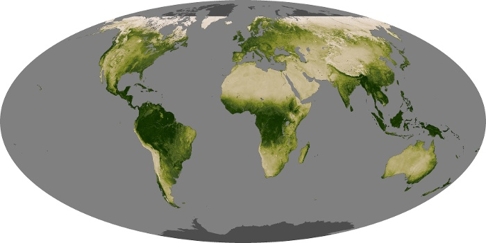 Global Map Vegetation Image 69