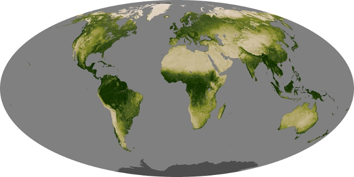 Global Map Vegetation Image 22