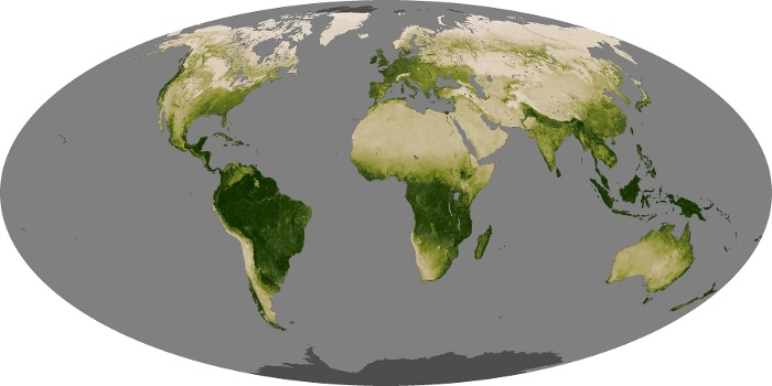 Global Map Vegetation Image 26