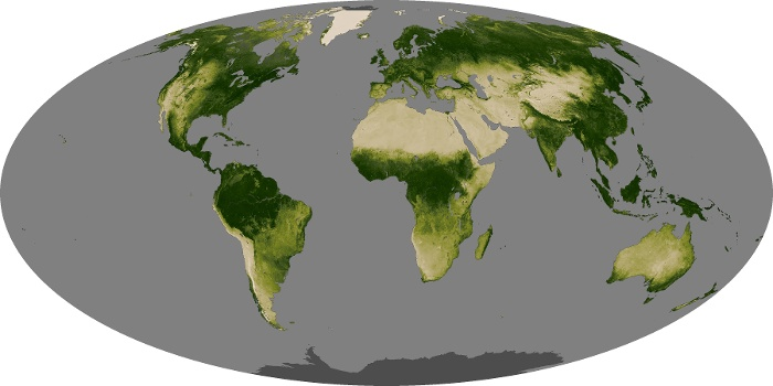 Global Map Vegetation Image 90