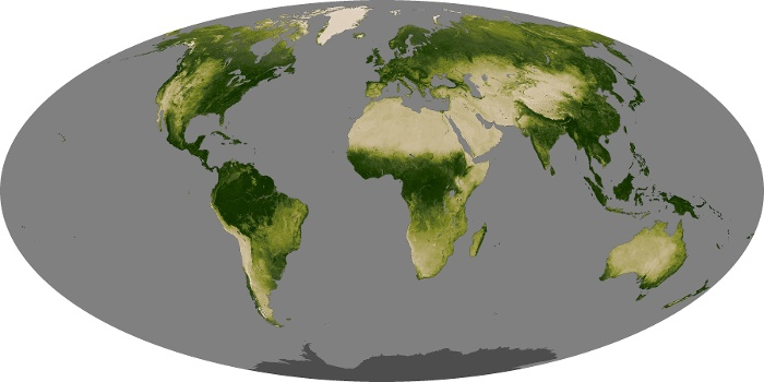 Global Map Vegetation Image 45