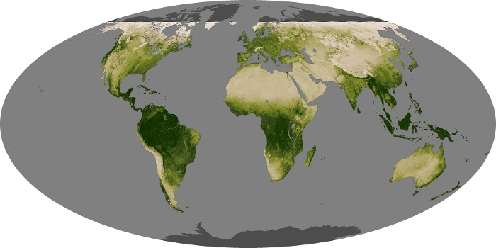 Global Map Vegetation Image 48