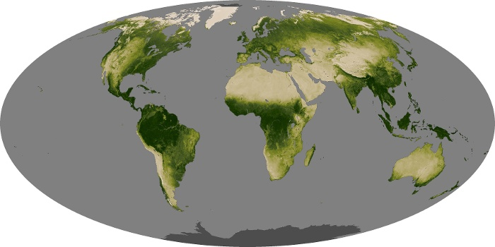 Global Map Vegetation Image 58