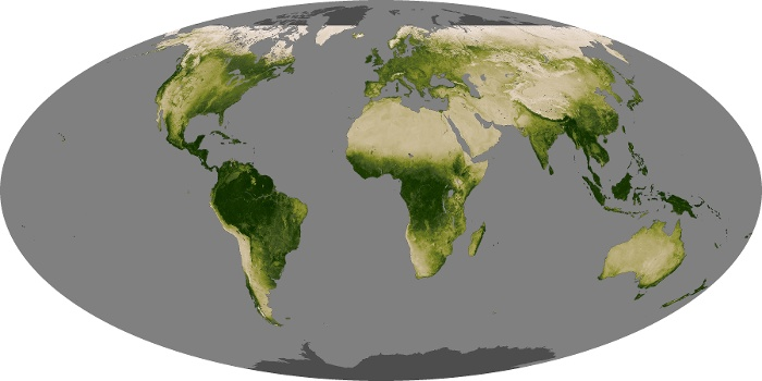 Global Map Vegetation Image 117