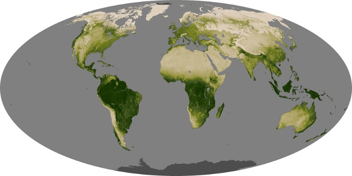 Global Map Vegetation Image 121
