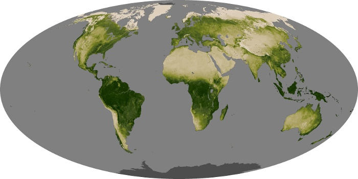 Global Map Vegetation Image 64