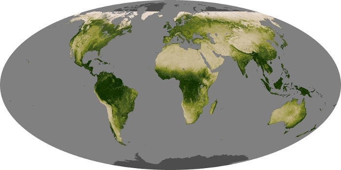Global Map Vegetation Image 71