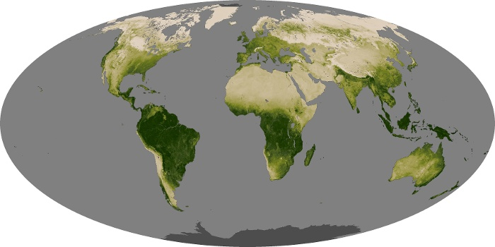 Global Map Vegetation Image 105