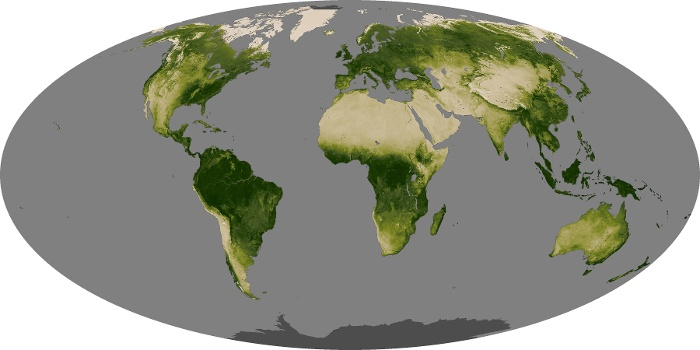 Global Map Vegetation Image 135