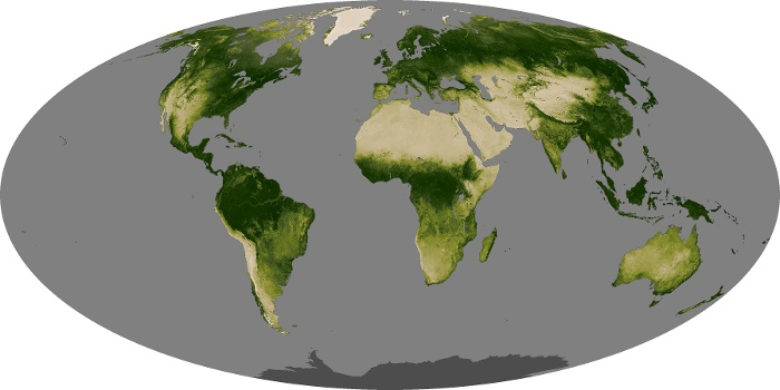 Global Map Vegetation Image 79