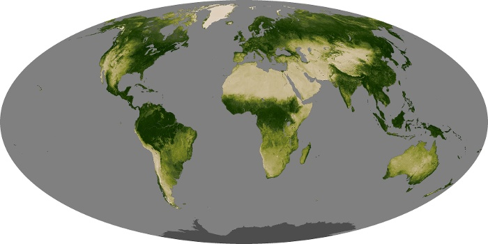 Global Map Vegetation Image 80