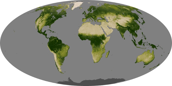 Global Map Vegetation Image 111