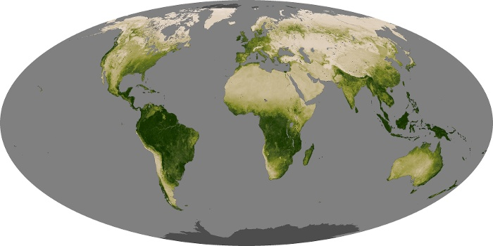 Global Map Vegetation Image 116