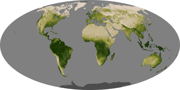 Global Map Vegetation Image 145