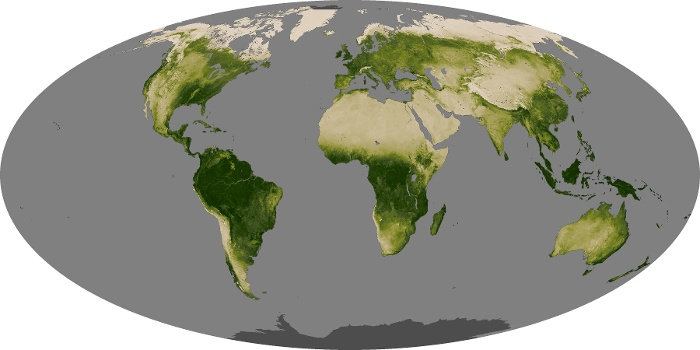 Global Map Vegetation Image 88