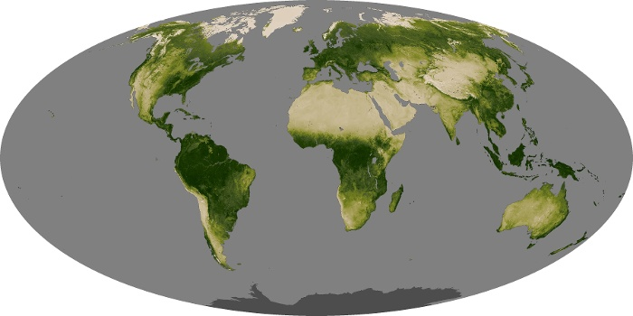 Global Map Vegetation Image 89