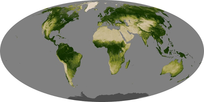 Global Map Vegetation Image 149