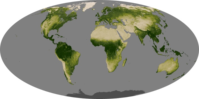 Global Map Vegetation Image 94