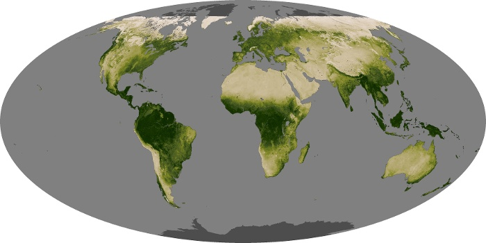 Global Map Vegetation Image 153