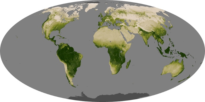 Global Map Vegetation Image 98