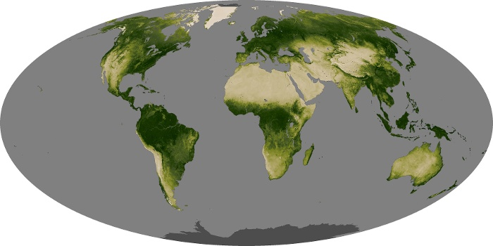 Global Map Vegetation Image 132